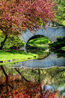 Dow Gardens Footbridge-spring reflections