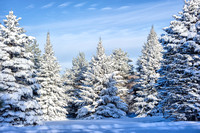 Snowy Pines, Montcalm County, Michigan