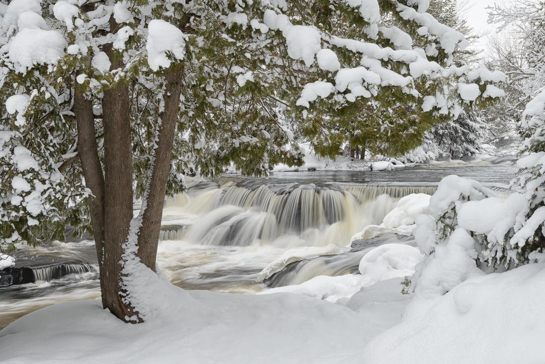Snow-laden trees at Upper Bond Falls