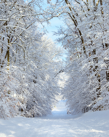 """Country Roads""  Snowy Michigan back road   ( Winter Gallery )"