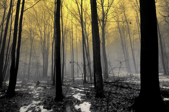 """Foggy Forest Dawn"" Lower Michigan Winter"