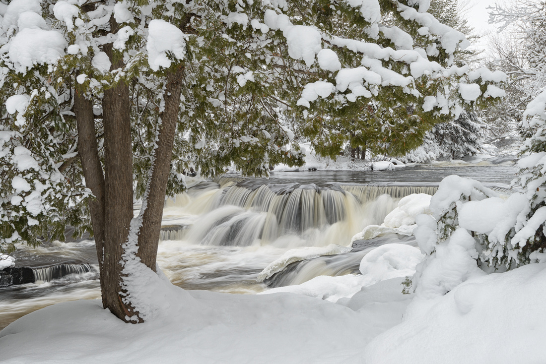 Snow-laden trees at Upper Bond Falls